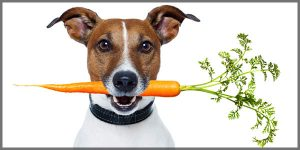 A dog holding a carrot